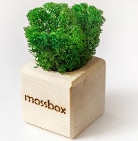 "Эко куб ""MossBox Wooden Green Cube"""